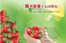 草莓 销售 爱心图片