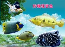 珍稀观赏鱼图集图片