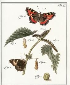 蝴蝶 装饰画图片