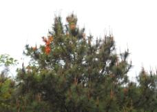 绿树红花图片
