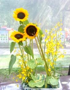向日葵盆景图片