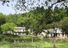 绿树风景图片