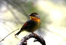 小鸟和树图片