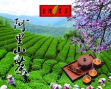 阿里山茶图片