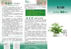 红豆杉宣传单图片