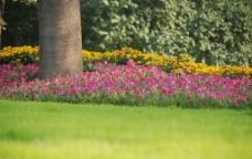 花草树图片