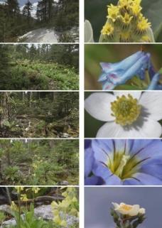 森林素材图片