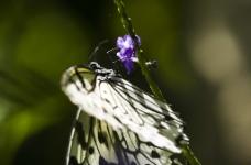 紫色的花和蝴蝶图片