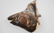 深海鱼头图片