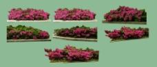 春天花的系列图片