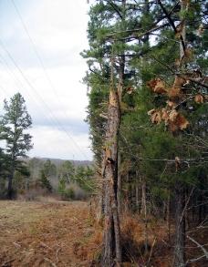 森林风光图片