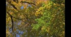 树林四季变化