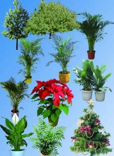 绿色植物素材图片