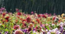雨中的花海图片