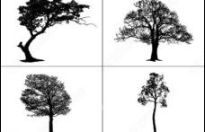 超逼真树木ps笔刷矢量包图片