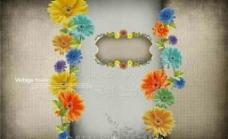 菊花相框图片