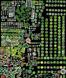 景观规划平面树图片