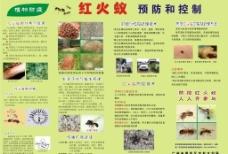 红火蚁预防和控制图片