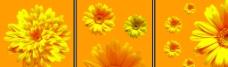 无框画菊花图片