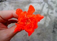 红色石榴花图片