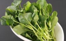 小青菜图片