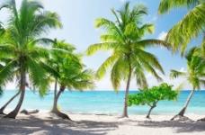 海洋沙滩椰子树图片