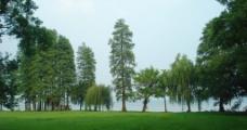 绿草地 绿色 垂柳图片