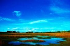 沼泽地风光图片