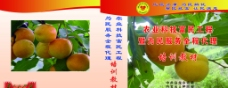 满城县农村水果全程代理图片