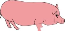 红色小猪图片