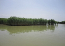 沙湖风景图片