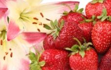 草莓 新鲜草莓图片