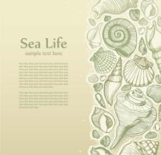 手绘贝壳卡片背景图片