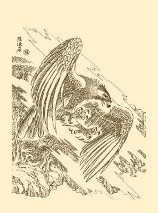 白描鹰图片