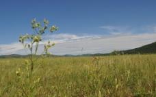 木兰草原图片