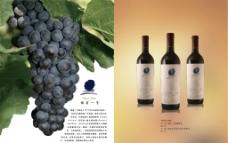 傲翁一号葡萄酒画册设计图片