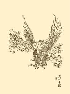 白描鷹圖片