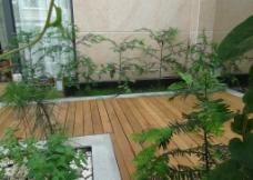 树木木板走廊图片