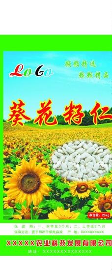 葵花籽(平面图)图片