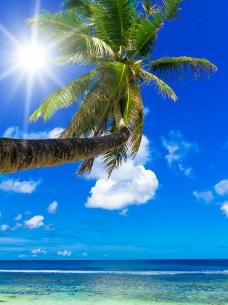 蓝天 白云 大海 椰树图片