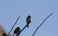凝神中的小鸟图片