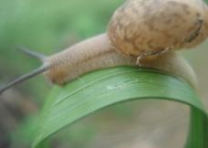 想家的蜗牛图片