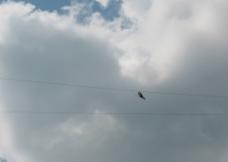 高空吊钢丝图片