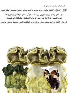 胡楊蘑菇 羊肚菌圖片