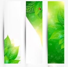 绿叶瓢虫 绿色生态环保背景图片