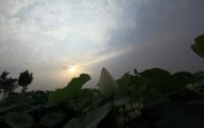 荷塘之晨图片