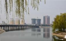 柳堤的桥图片