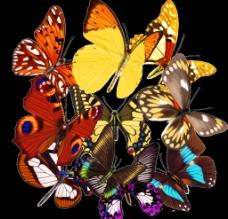 蝴蝶分層圖片