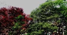 节日的园林图片