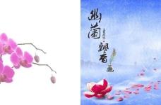 幽兰飘香画册封面图片